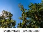 mahogany hammock trail  a... | Shutterstock . vector #1263028300
