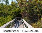 mahogany hammock trail  a... | Shutterstock . vector #1263028306