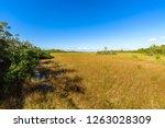 mahogany hammock trail  a... | Shutterstock . vector #1263028309