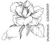 vector rose flower. isolated... | Shutterstock .eps vector #1263063559