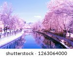 color infrared landscape | Shutterstock . vector #1263064000