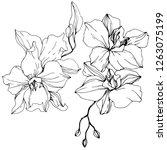 vector orchid. floral botanical ... | Shutterstock .eps vector #1263075199