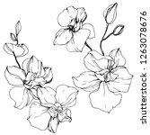 vector orchid. floral botanical ... | Shutterstock .eps vector #1263078676