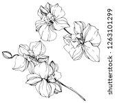 vector. orchid flower. floral...   Shutterstock .eps vector #1263101299