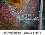 raindrops on the web | Shutterstock . vector #1263157846