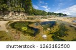 Ocean Tidepool Ecosystems, on Botanical Beach, British Columbia