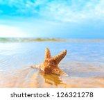 Dream Sea Shell