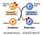 oxidation and reduction in loss ... | Shutterstock .eps vector #1263276619