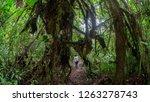 woman seen from behind walking... | Shutterstock . vector #1263278743
