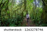 woman seen from behind walking... | Shutterstock . vector #1263278746