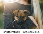 girl holding rescue puppy from... | Shutterstock . vector #1263289516