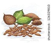 illustration of talisay fruit... | Shutterstock .eps vector #126329810