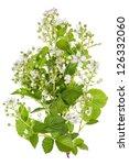 Spring Blackberry Bush White...