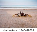 Close Up Of A Crab Without...