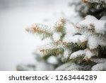 beautiful winter background....   Shutterstock . vector #1263444289