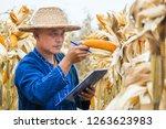 asian farmer or biologist... | Shutterstock . vector #1263623983