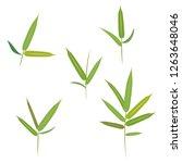 jungle plants  green bamboo...   Shutterstock .eps vector #1263648046