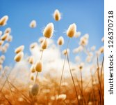 Shallow focus of soft wild grasses against a blue sky in golden field - stock photo