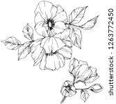 vector rosa canina. floral... | Shutterstock .eps vector #1263772450