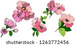vector pink rosa canina. floral ... | Shutterstock .eps vector #1263772456