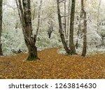 wonderful autumn forest. mezmay ... | Shutterstock . vector #1263814630
