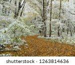 wonderful autumn forest. mezmay ... | Shutterstock . vector #1263814636