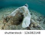 a dead blacktip reef shark ... | Shutterstock . vector #126382148