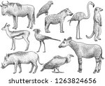 african animal collection ... | Shutterstock .eps vector #1263824656