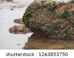 rocks along the seashore on the ... | Shutterstock . vector #1263853750