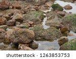 rocks along the seashore on the ... | Shutterstock . vector #1263853753