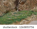 rocks along the seashore on the ... | Shutterstock . vector #1263853756