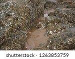 rocks along the seashore on the ... | Shutterstock . vector #1263853759