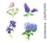 hand drawn botanical... | Shutterstock . vector #1263912493