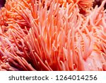 Flower Sea Living Coral And...