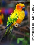 Stock photo sun conure parrot on a tree branch 126401819