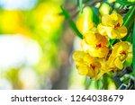 Nature Flower Concept Yellow Orchids - Fine Art prints