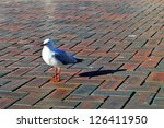 alone seagull in darling... | Shutterstock . vector #126411950