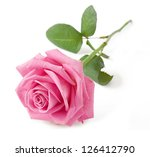 Stock photo pink rose isolated on white background 126412790