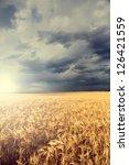 Rain Over Wheat Field