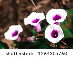colourful flowers in a garden | Shutterstock . vector #1264305760