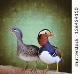 Couple Of Mandarin Duck With...