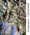 mud texture photo | Shutterstock . vector #1264343083