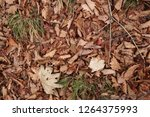 dry leaves on the ground.... | Shutterstock . vector #1264375993
