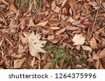 dead leaves on the ground  view ... | Shutterstock . vector #1264375996