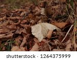 dry autumn leaf on the ground.... | Shutterstock . vector #1264375999
