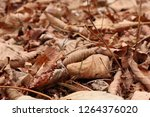 dry autumn leaves on the ground.... | Shutterstock . vector #1264376020