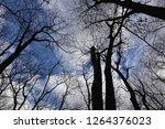 bare trees against gloomy sky ... | Shutterstock . vector #1264376023