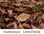 dry autumn leaf on the ground.... | Shutterstock . vector #1264376026