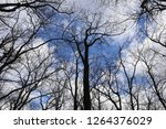 bare trees against blue cloudy... | Shutterstock . vector #1264376029