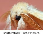 Macro Photography Of Head Of...